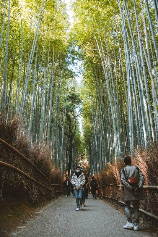 Kyoto_9019