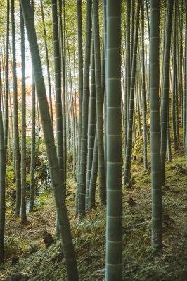 Kyoto_9061